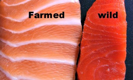 Farmed Salmon Is FULL Of Harmful Contaminants Not Approved By The EPA!