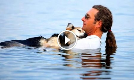 If you have a dog, this will be the best video you watch today!