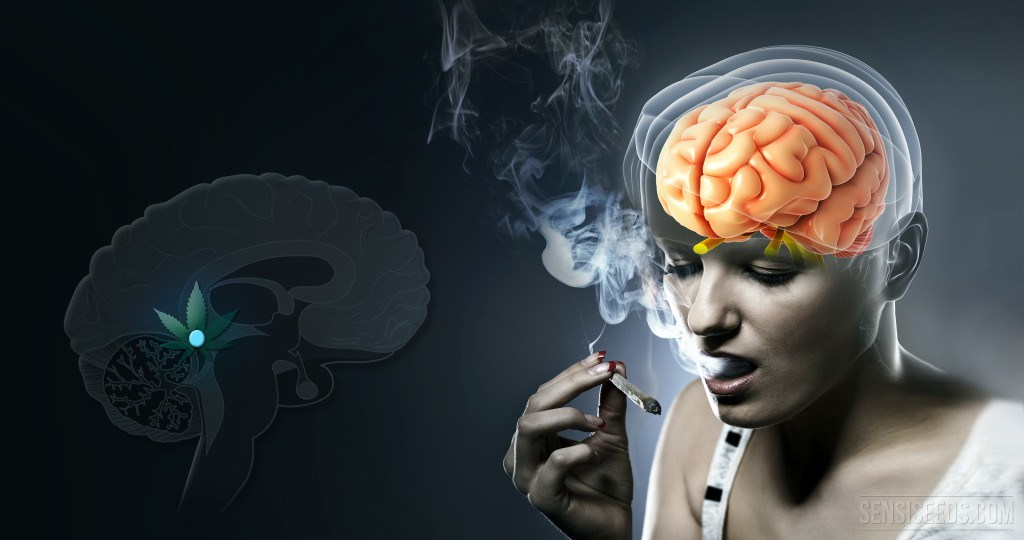 What Happens In The Pineal Gland When We Use Cannabis