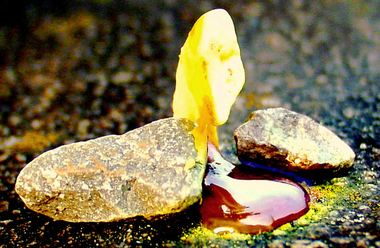 Quot Organic Sulfur Quot This Ancient Mineral Completely