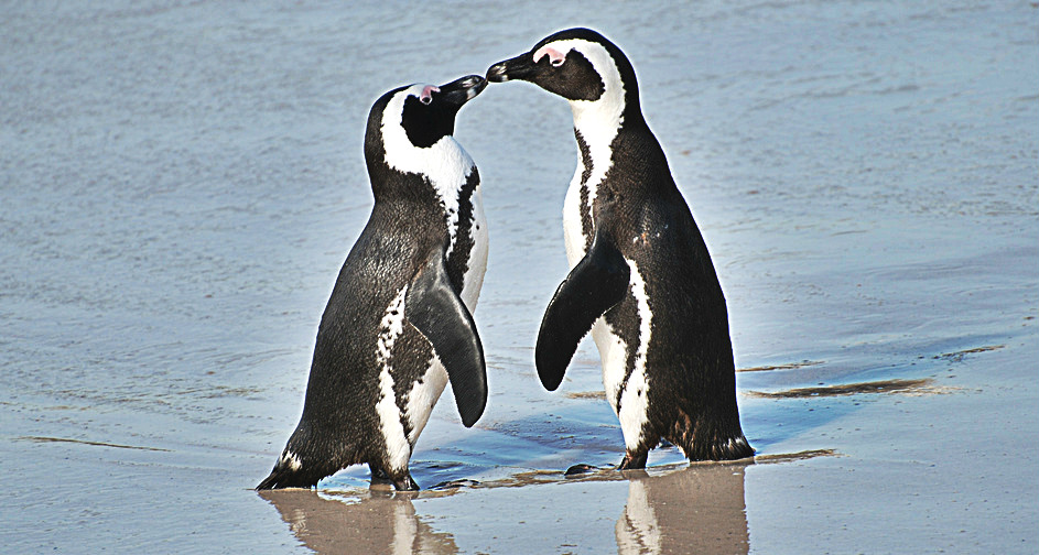 Learning about love penguin